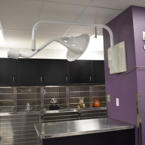 North Treatment Room – Patient Kennels
