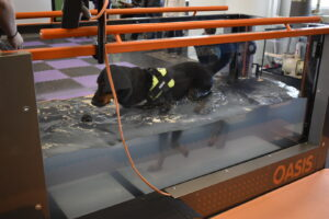 dog in underwater treadmill, pet physical rehabilitation