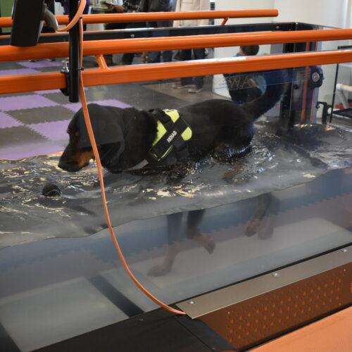 Under-Water Treadmill